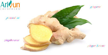 China Pure Freeze Dried Organic Ginger Extract Powder For Weight Loss  Medical Uses supplier