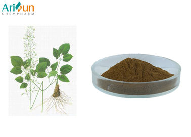 China Epimedium Herb Extract Promoting Sexual Function Icariin 5%-98% supplier